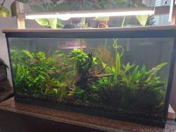 My Aquarium 1 * The Original