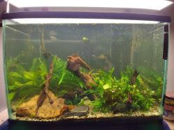 My Aquarium 2 * Bedroom TV