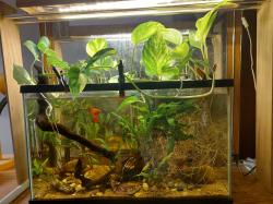 My Aquarium 3 * Palace of Spot