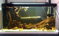 Centromochlus schultzi tank