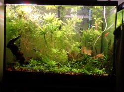 37 Gallon - Getting to be less of a disaster