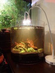 5.8 gallon - Vase