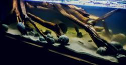 My Aquarium(8)