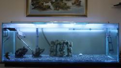 6ft 6x2x2 ft Spikes castle, turtle tank.