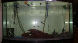 My Aquarium 90 Gal (340.68L)