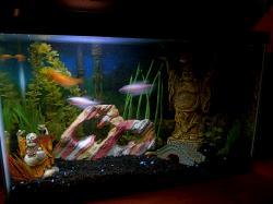 My Aquarium(3)