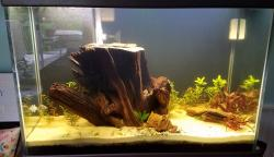 "65 Gallon - ""Stump Island"""