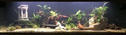 300L catfish tank