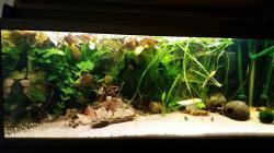 My Aquarium(1)