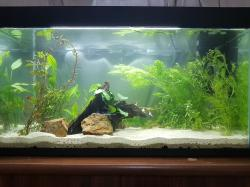 My 29 Gallon Walstad Tank