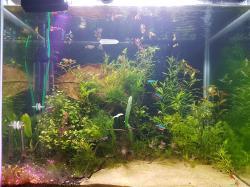 My Aquarium(33 Gal)