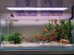 My Aquarium(57 gallons)
