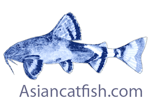 Asian Catfish.com